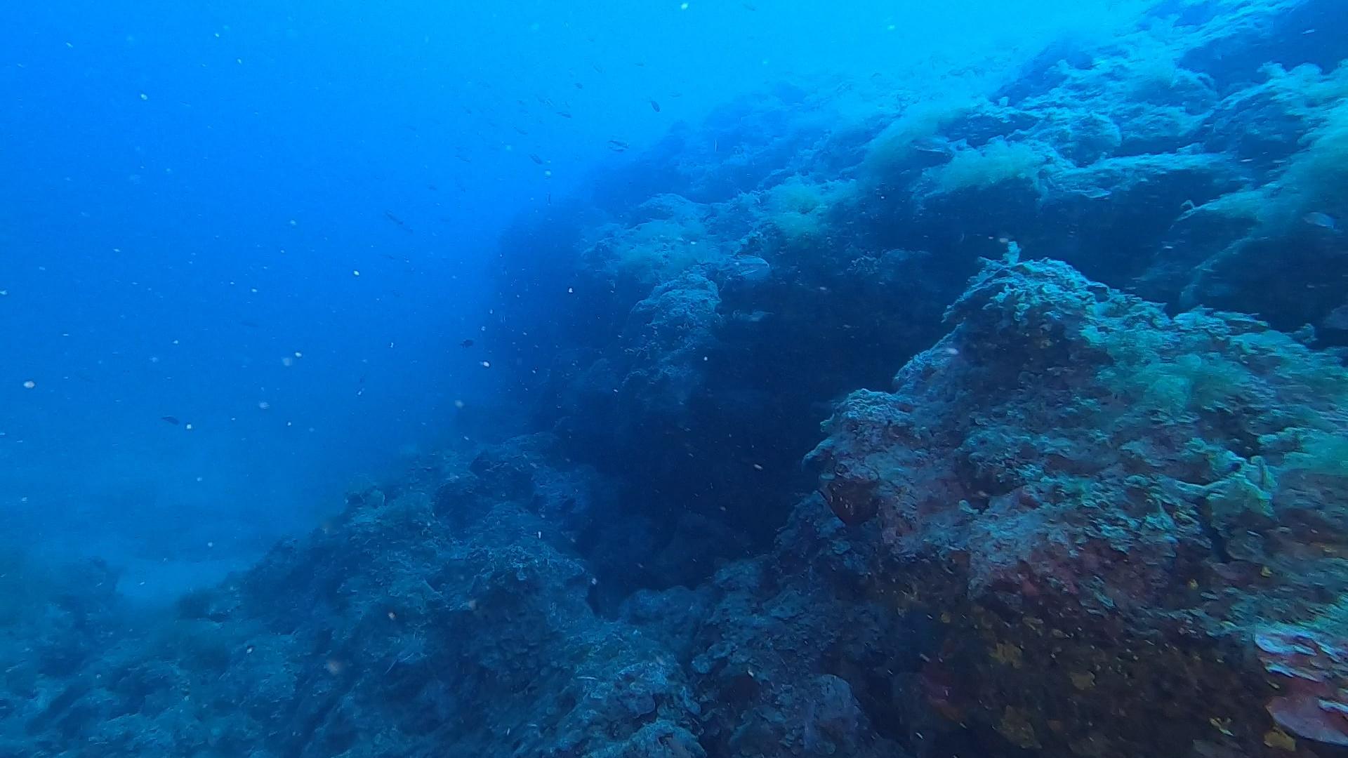 Aragosta Mediterranea Palinurus elephas Spiny lobster - Scogliera - Reef - intotheblue.it