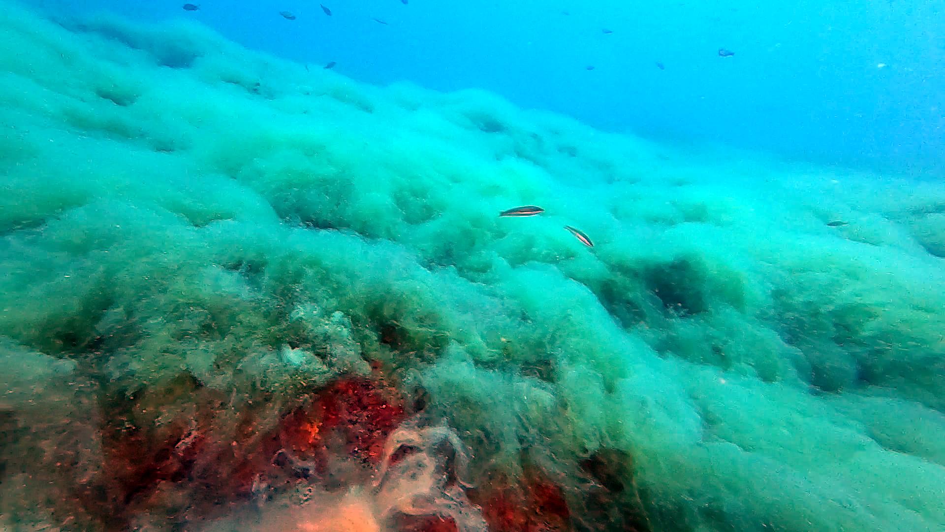 Mucillagine marina - Effetti dei cambiamenti climatici nel Mediterraneo - The Sea Snot or marine Mucilage - Effects of climate change in the Mediterranean Sea - intotheblue.it