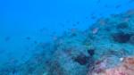 Murena - Muraena helena Moray eel - intotheblue.it