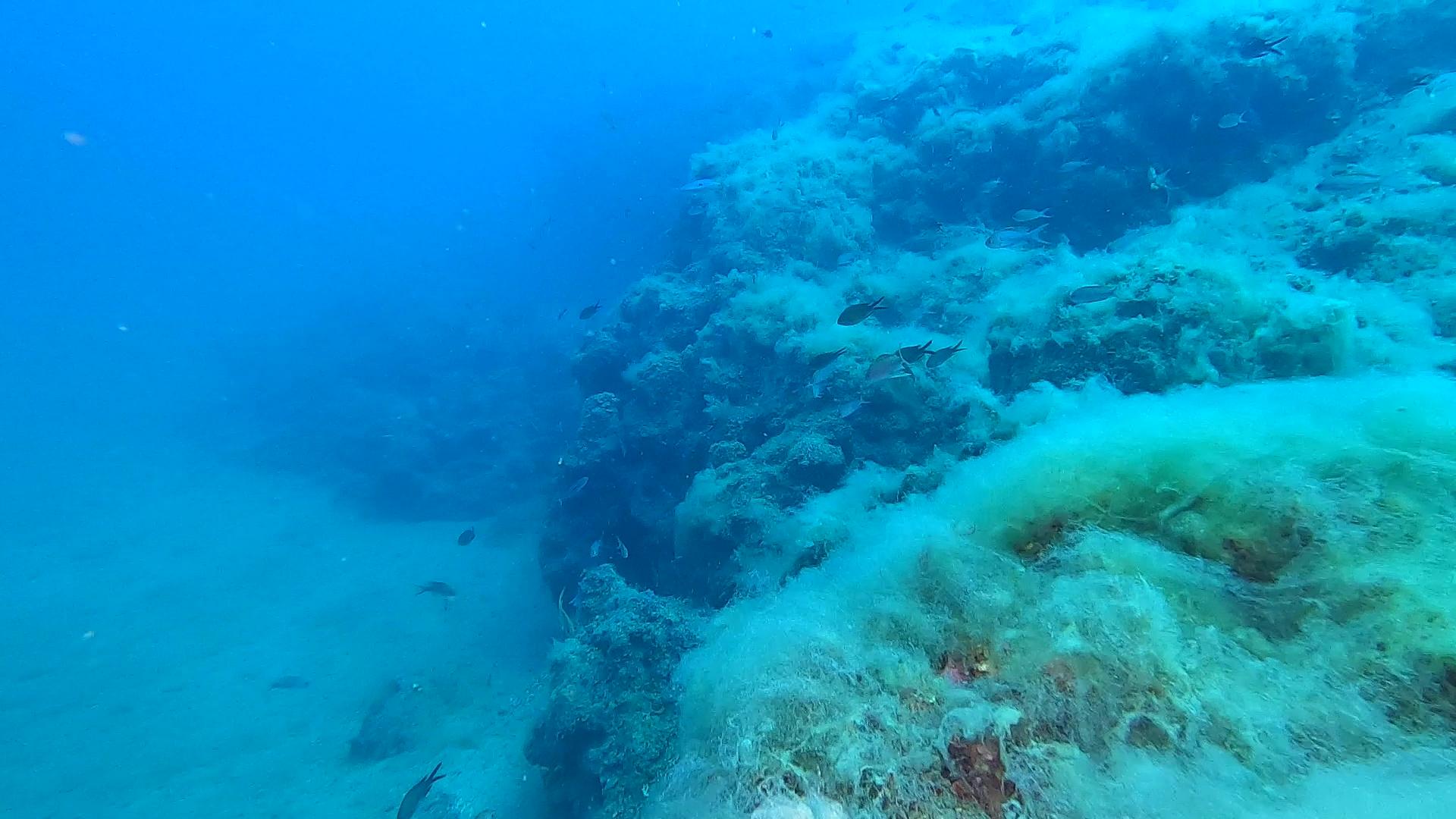 Mucilage Sea Snot Mucillagine intotheblue.it