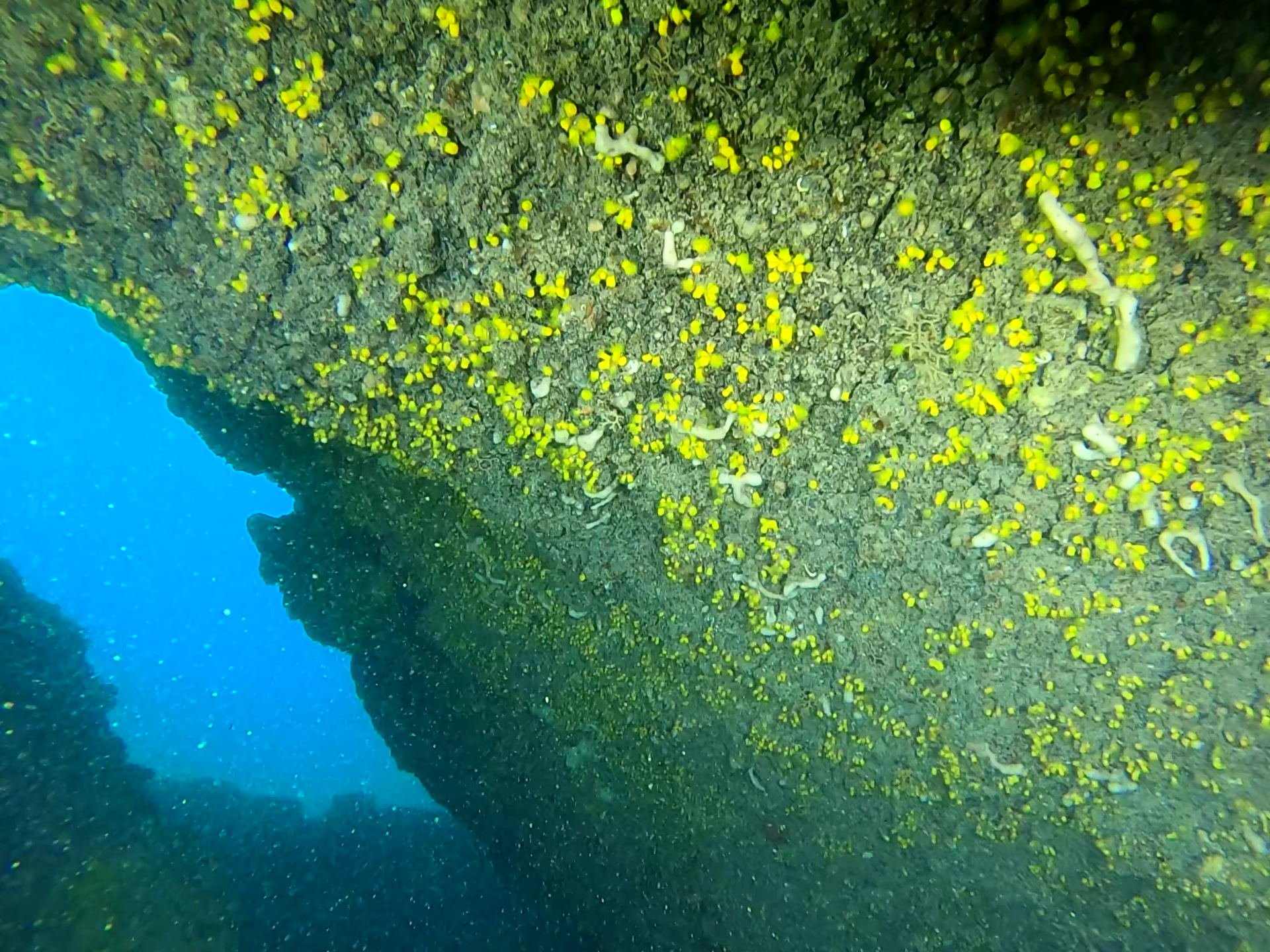immersione in grotta - Parazoanthus axinellae - intotheblue.it