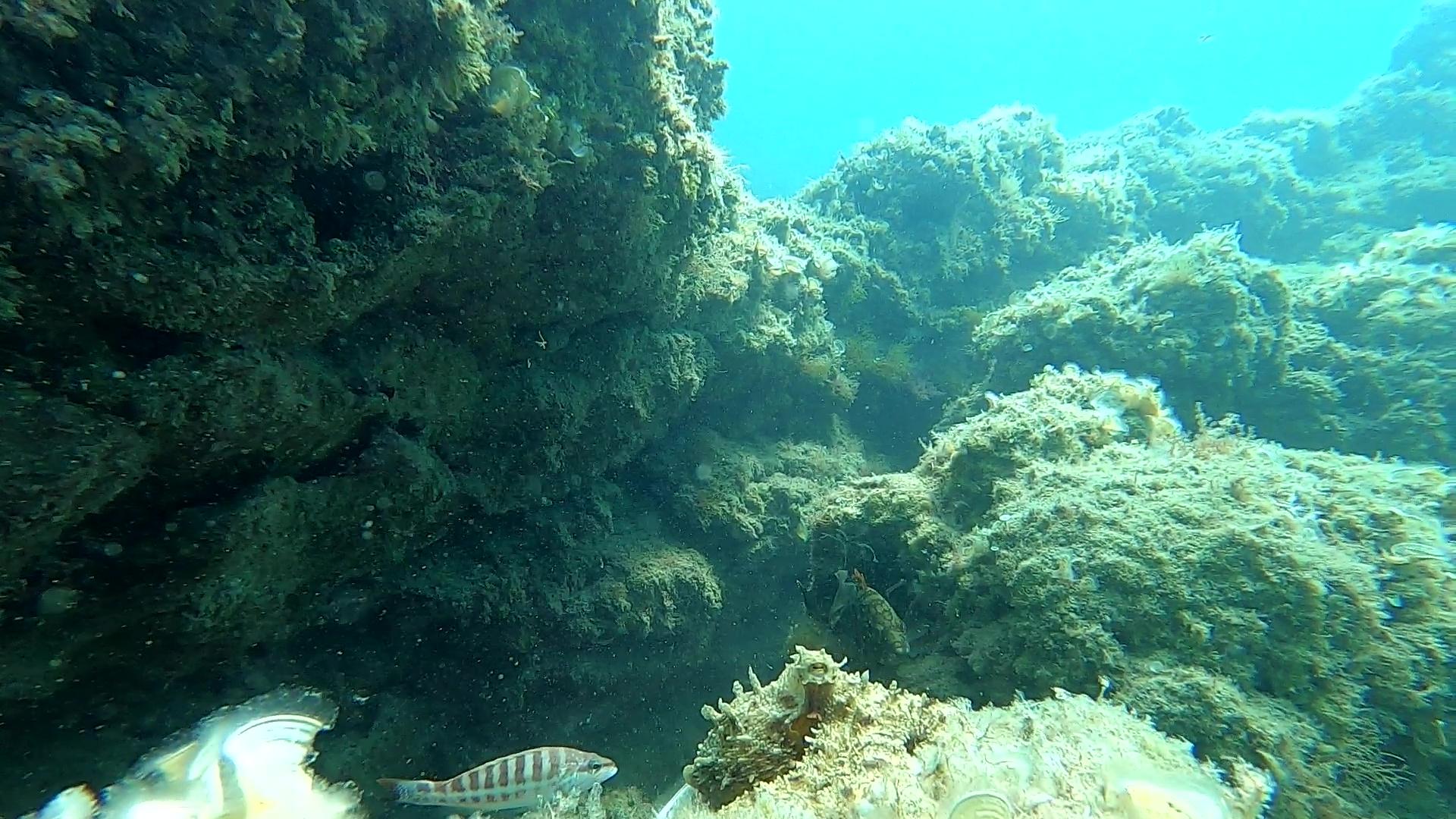 Il Polpo e la Cernia Octopus and Grouper intotheblue.it