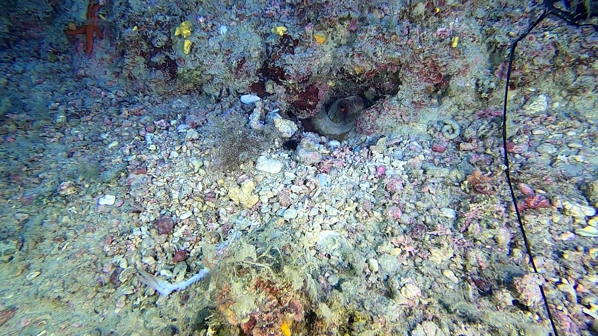 Le prede del polpo-The prey of the octopus-intotheblue.it