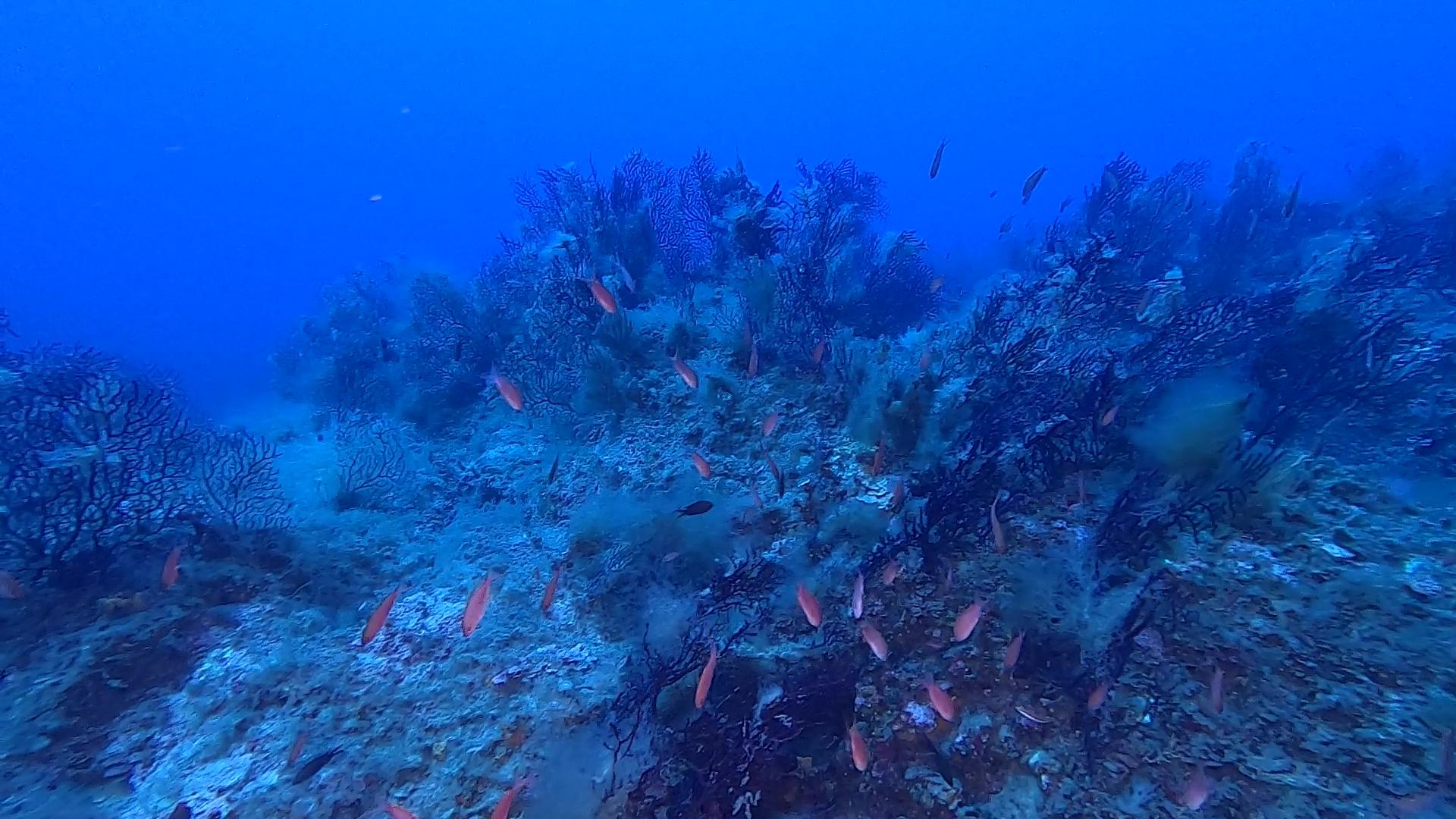 Missing Island L'Isola mancata www.intotheblue.it
