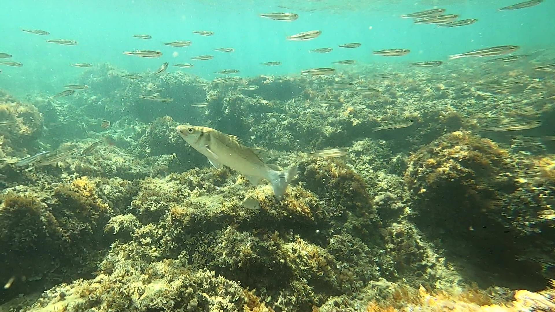 Seabass Hunting