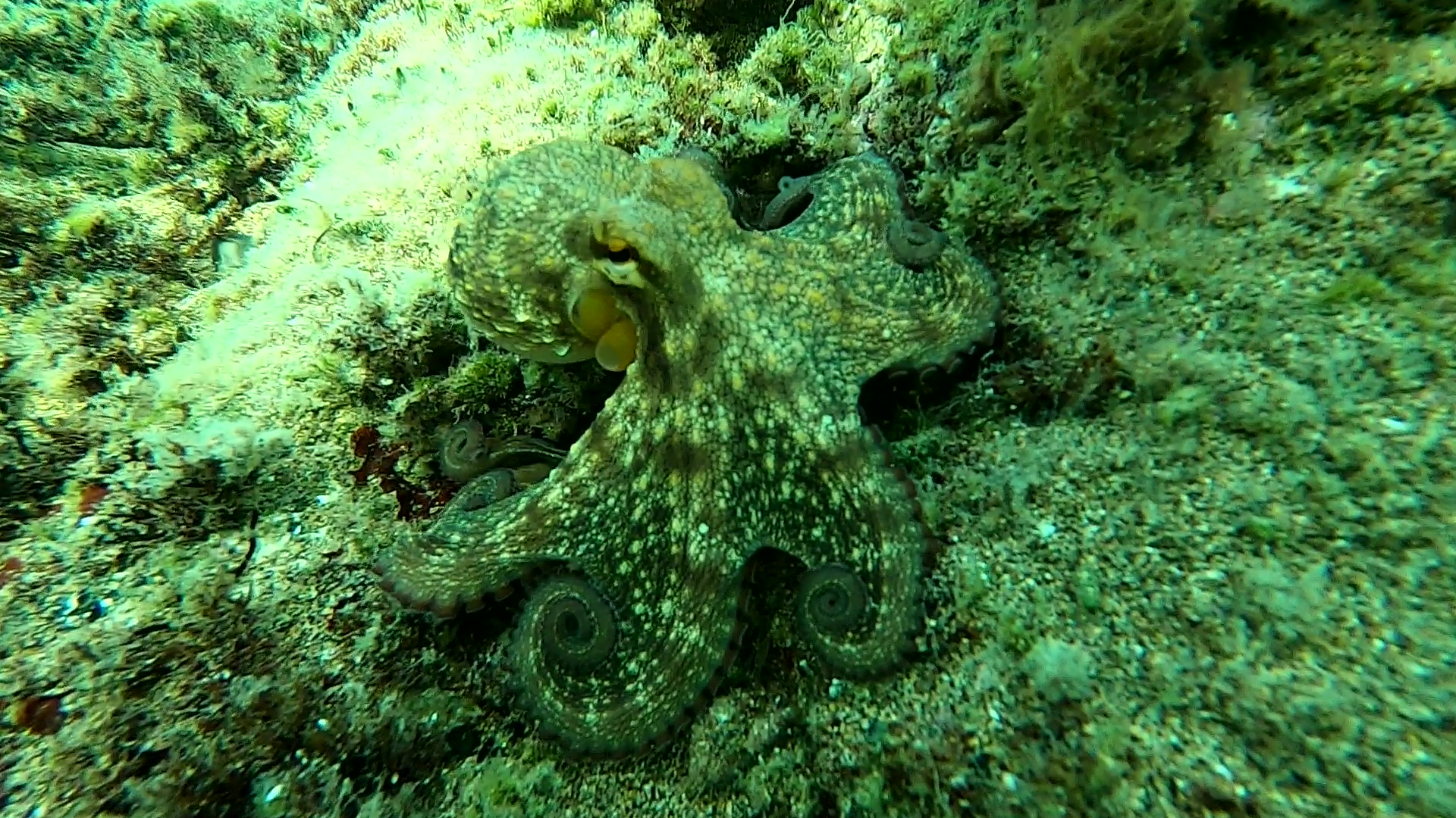 Polpo nella sabbia - Octopus in the sand - intotheblue.it